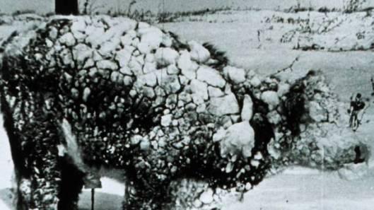 Talviseen lumimyrskyyn tottumaton karja kärsi valtavia tappioita Yhdysvaltain eteläosia ripotelleessa Goliath-myrskyssä. Kuvalähde: Queensland Country Life.