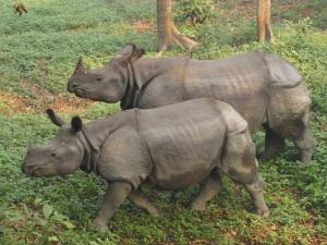 Chotwan National Park -kansallispuisto on yksi uhanalaisen intiansarvikuonon ydinalueista. Kuva: Rovingturtle.com