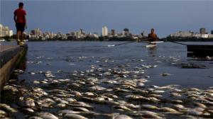 Vedenpinnan tasolla ja vedessä totuus Rion vesiurheilupaikkojen hygienisestä tilasta osoittautuu murheelliseksi, mitä todistavat viime vuosina havaitut laajat kalakuolemat. Kuva: Reuters.