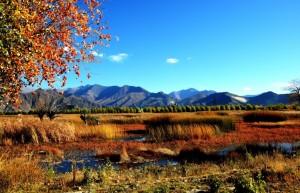Tibetin ylänköalueilla on runsaasti biologisesti monimuotoisia kosteikkoja. KUva: chinatibettrain.com.