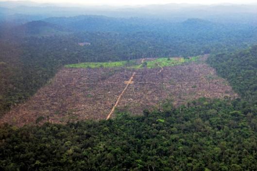 Noin 80 prosenttia Amazonian hakkuista tehdään laittomasti, eivätkä viranomaiset pysty valvomaan rikollista toimintaa. Kuva: Stian Bergeland, Rainforest Foundation Norway.
