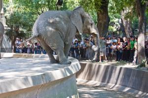Afrikannorsu esiintyy yleisölle Buenos Airesin eläintarhassa, jonka oloja on kuvattu eläimille sopimattomiksi. Kuva: SimonHampel.com.