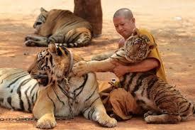 """""""Tiikeritempelin""""arki näyttää auvoisalta, mutta viranomaisten mukaan tiikereitä on kohdeltu kaltoin. Kuva: Goldenthaiagency.com."""
