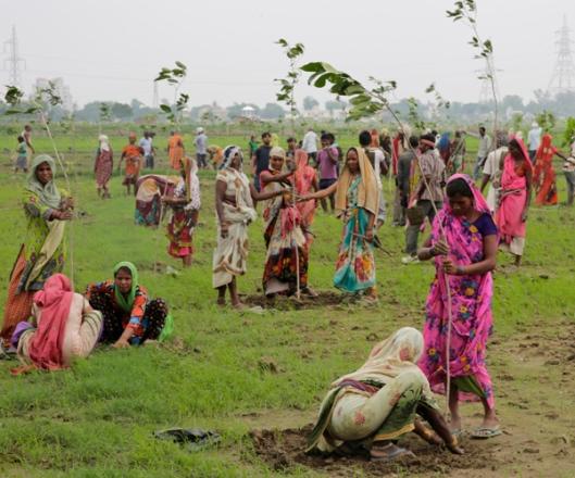 Maailmanennätysprojektiin osallistuneet vapaaehtoiset istuttamassa puuntaimia Allahabadin kaupungin laitamilla (Kuva: Rajesh Kumar Singh, AP Photo, via newsmax.com.