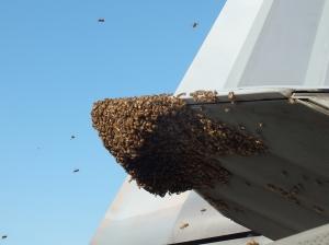 20 000 mehiläisen parvi osoittautui liian vahvaksi vastustajaksi maailman tehokkaimmaksi taistelukoneeksi luonnehditulle F-22 Raptor -hävittäjälle. Kuva: U.S. Air Force.