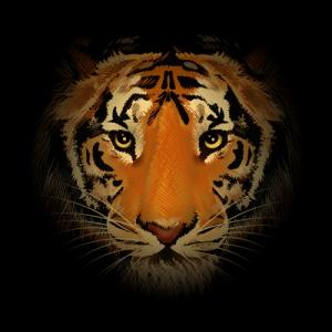 Pitkään jatkunut Intian tiikerikannan voimistuminen on kohdannut ikävän käänteen vuoden 2016 alkupuoliskolla. Kuva: icilart.com.