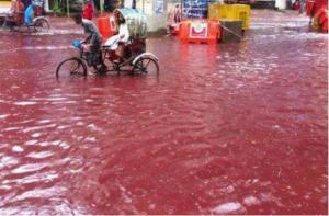 Dhakan kadut olivat dramaattisen verisiä muslimien juhlaan liittyvien teurastusten ja rankkasateiden sattuessa saman aikaan. Kuva: Twitter, via International Business Times.