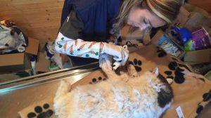 Maanjäristyksessä sortuneen talon rauniossa yli kaksi viikkoa selvinnyt Pietro osoitti todeksi tarinat kissojen elinvoimasta ja sitkeydestä. Kuva: ENPA.