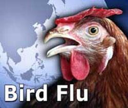 Lintuinfluenssat ovat tuttu ongelma Intiassa, joten viranomaisten valmius ennaltaehkäisevään torjuntatyöhön ja yleisölle tiedottamisen ovat valmiina. Kuva; topnews.in.