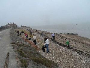 Brittein saarten rantojen siivoustalkoisiin osallistui syyskuussa 2016 yli 6 000 vapaaehtoista. Kuva: Marine Conservation Society.