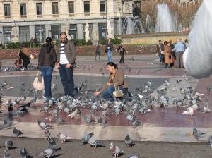 Pulut ovat luonteenomainen – ja etenkin turistien suosima – osa kaupunkielämää. Monen kaupungin päättäjät kuitenkin tahtovat päästä näistä asukkaistaan, joiden pelätään ulosteillaan likaavan ja aggressiivisella käytöksellään häiritsevän ihmisiä. Barcelona. Kuva: wikimedia.org.