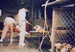 Koirien kohtelu ja käsitely ovat lihamarkkinoilla brutaaaleja. Kuva: Korea Animal Protection Society.