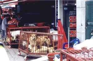 Tuhansia koiria on ollut kaupan Moran Meat Market -markkinoilla ihmisten ruoaksi, vaikka korealaisten enemmistö vastustaa koirien syömistä. Kuva: Korea Animal Protection Society.