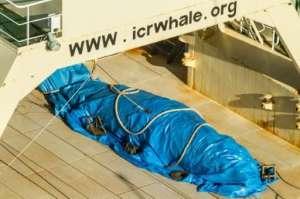 Japanilaiset tiesivät toimivansa laittomasti lahtivalaan pyynnissä, ja siksi tapettu valas peitettiin heti kuvaajien lähestyessä. Kuva: Sea Shepherd Global.