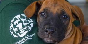 Suojelujärjestön hoiviin otetut koirat välttyivät syödyksi tulemiselta. Kuva: Humane Society International.