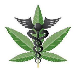 Lääkekannabis pitää erottaa viihde/huumekäytössä olevasta, laittomasta marihuanasta. Kuva: healtline.com.