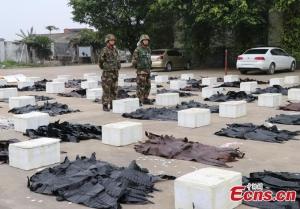 Etelä-Kiinan mereltä takavarikoitu krokotiilinnahkojen erä oli matkalla Vietnamista Kiinaan. Kuva: Wang Lidan, China News Service.